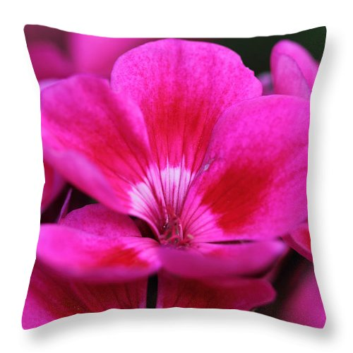 Pink Flowers Throw Pillow featuring the photograph Vibrant Pink Flowers by Angela Murdock