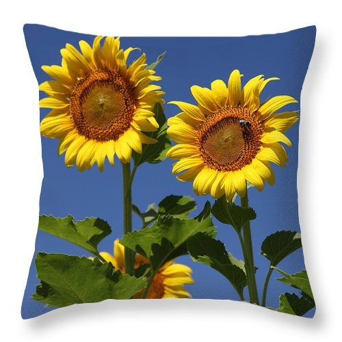 Sunflower Throw Pillow featuring the photograph Viewing The Past by Amanda Barcon