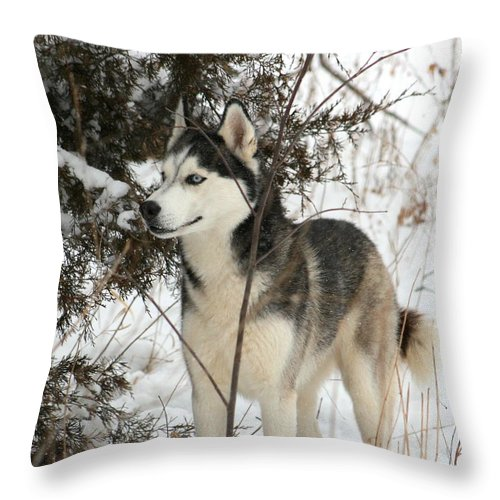 Animal Throw Pillow featuring the photograph Vigilant by David Dunham
