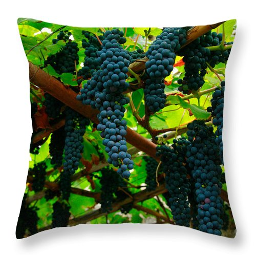 Countryside Throw Pillow featuring the photograph Vines by Gaspar Avila
