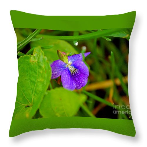 Violet Throw Pillow featuring the photograph Violet After The Rain by Elizabeth Stone