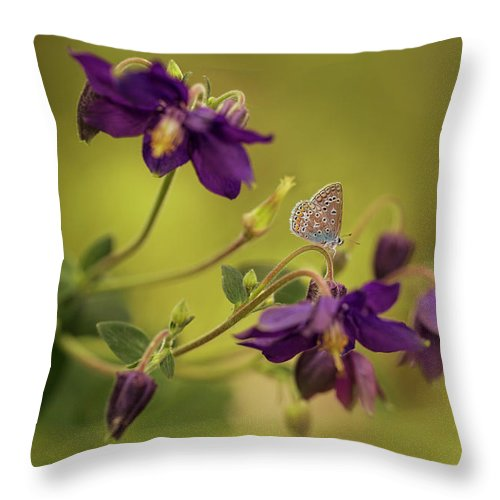 Garden Throw Pillow featuring the photograph Violet Columbines by Jaroslaw Blaminsky