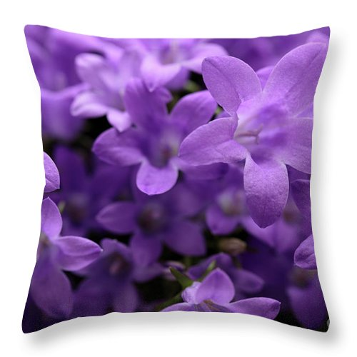 Horizontal Throw Pillow featuring the photograph Violet Dream IIi by Stefania Levi