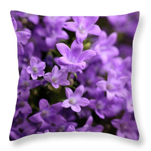 Horizontal Throw Pillow featuring the photograph Violet Dream Vi by Stefania Levi