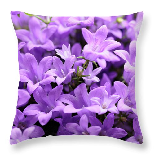 Horizontal Throw Pillow featuring the photograph Violet Dream Vii by Stefania Levi