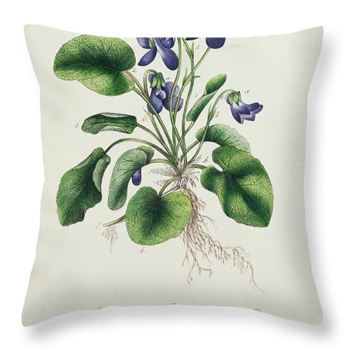 Flower Throw Pillow featuring the painting Violets by English School
