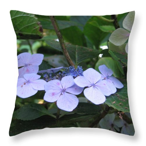 Violets Throw Pillow featuring the photograph Violets O The Green by Kelly Mezzapelle