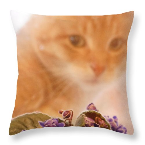 Orange Tabby Cat Throw Pillow featuring the digital art Violets with Cat by Jana Russon