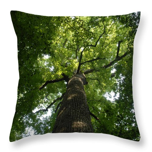 Joyce Kilmer Memorial Forest Throw Pillow featuring the photograph Virgin Canopy by David Lee Thompson