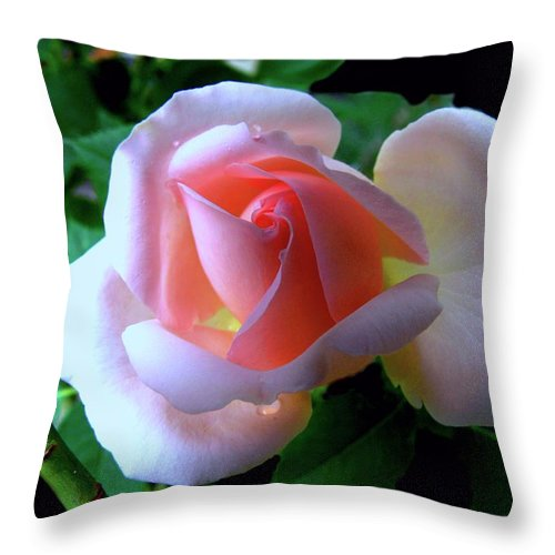 Vigin Rose Throw Pillow featuring the photograph Virgin Pink Rose With Thorns by Helmut Rottler