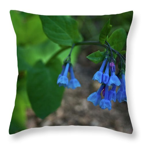 Virginia Throw Pillow featuring the photograph Virginia Bluebells In The Early Morning by Douglas Barnett