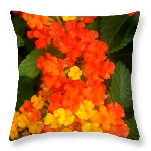 Nature Throw Pillow featuring the photograph Volcanic Display by Lucyna A M Green