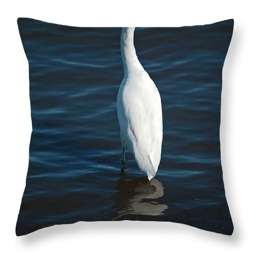 Bird Throw Pillow featuring the digital art Wading Reflections by DigiArt Diaries by Vicky B Fuller