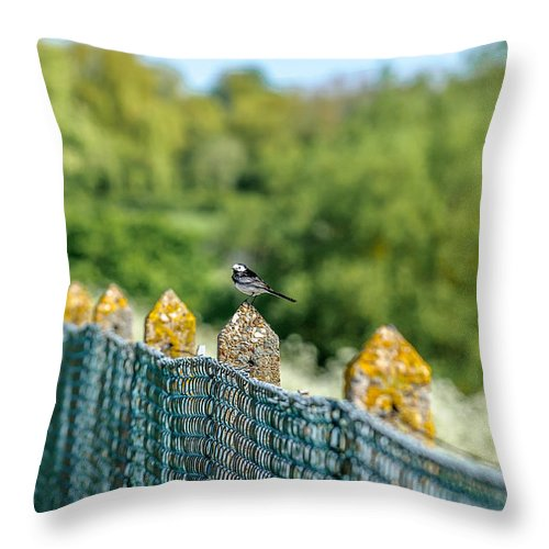 Throw Pillow featuring the photograph Wagtail by Paul Burgoine