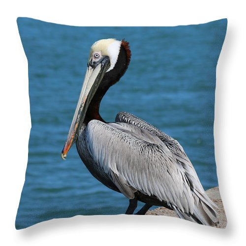 Wild Throw Pillow featuring the photograph Waiting For A Fish - 3 by Christy Pooschke