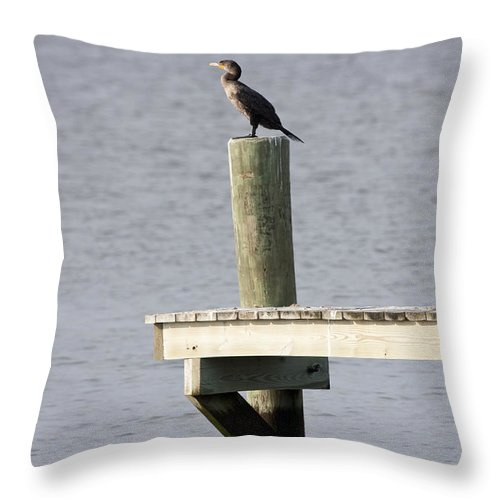 Seabird Throw Pillow featuring the photograph Waiting For A Fish by Mary Haber