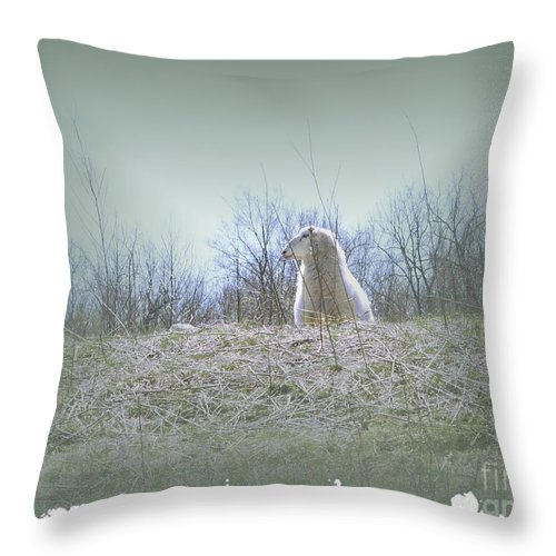 Sheep Throw Pillow featuring the photograph Waiting For The Shepherd by Carol Sweetwood