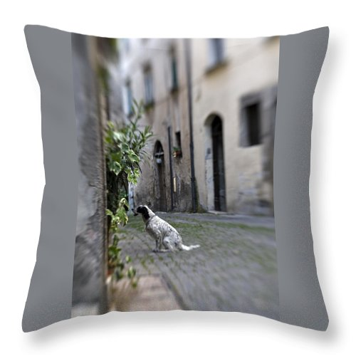 Dog Throw Pillow featuring the photograph Waiting by Marilyn Hunt