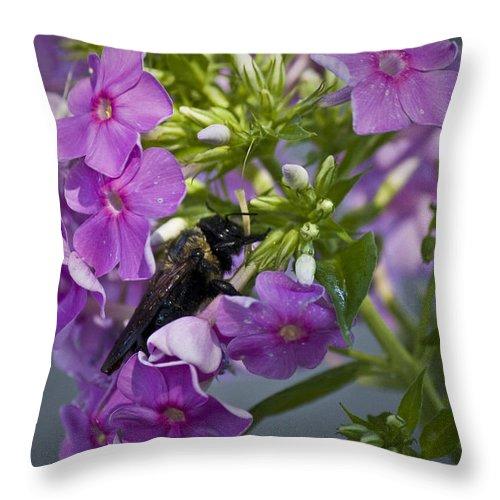 Bumblebee Throw Pillow featuring the photograph Wake Up Sleepyhead by Teresa Mucha