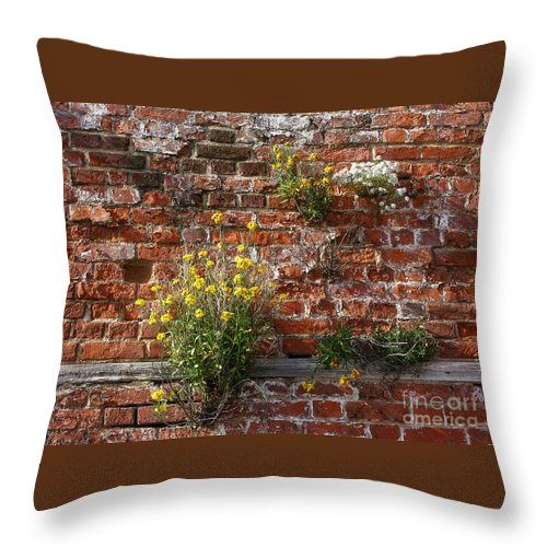 Wallflowers Throw Pillow featuring the photograph Wall Flowers by Ann Horn