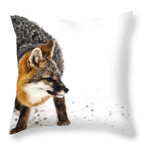 Red Throw Pillow featuring the photograph Wary Red Fox by Douglas Barnett