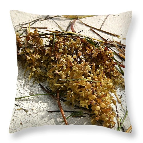 Seaweed Throw Pillow featuring the photograph Washed Ashore by Mary Haber