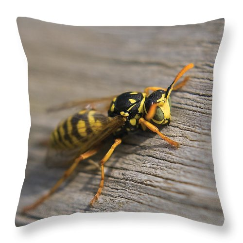 Wasp Throw Pillow featuring the photograph Wasp Close-up by Steve Somerville