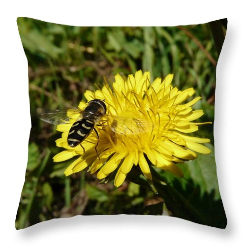 Wasp Throw Pillow featuring the photograph Wasp Visiting Dandelion by Valerie Ornstein
