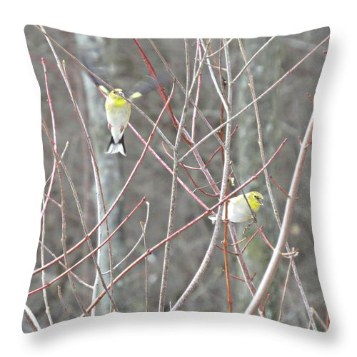 Yellow Bird Throw Pillow featuring the photograph Watch Me One Bird In Flight by Stephanie Forrer-Harbridge