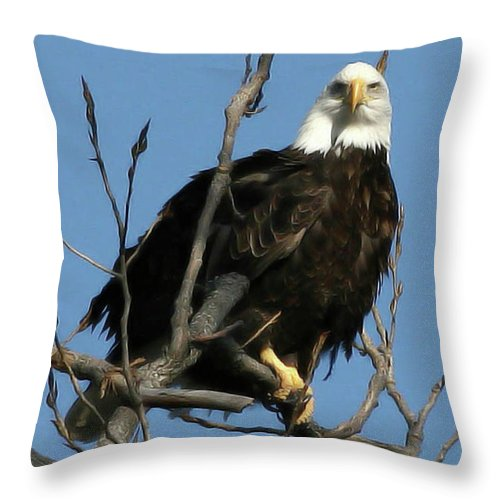 Eagle Throw Pillow featuring the photograph Watch On The Fox by Tommy Anderson