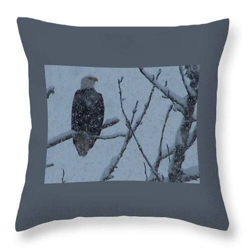 Throw Pillow featuring the photograph Watcher by Lkm Mkl