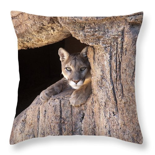 Cougar Throw Pillow featuring the photograph Watchful Eyes by Sandra Bronstein