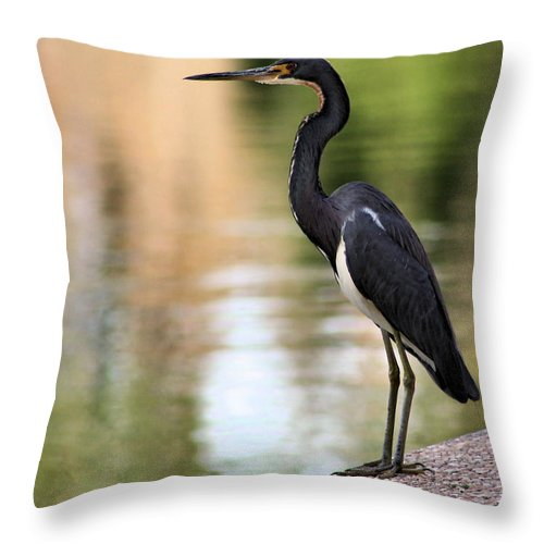 Heron Throw Pillow featuring the photograph Watchful by Kristin Elmquist
