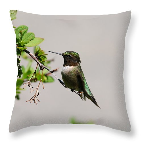 Hummingbird Throw Pillow featuring the photograph Watchful Male Hummer by Sandra Updyke