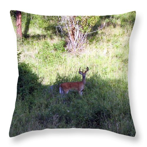 Deer Throw Pillow featuring the photograph Watchful by Will Borden