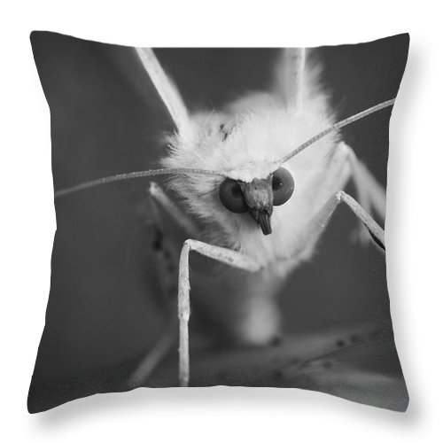 Macro Throw Pillow featuring the photograph Watching You by Keith Elliott
