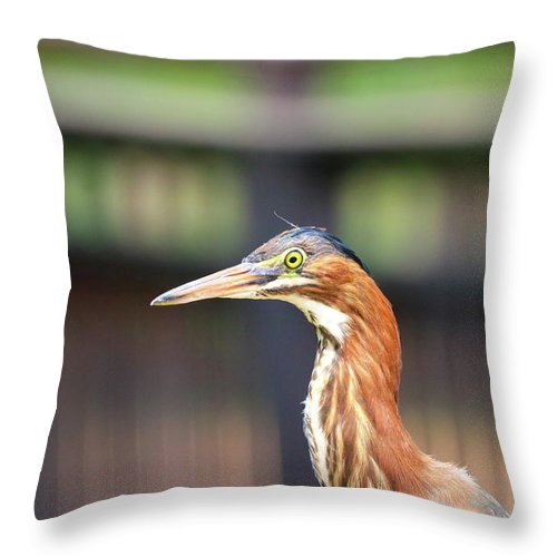 Throw Pillow featuring the photograph Watching You by Tony Umana
