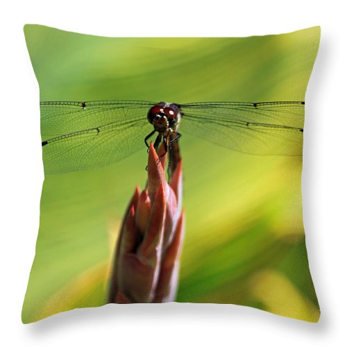 Dragonfly Throw Pillow featuring the photograph Watching You Watching Me by Suzanne Gaff