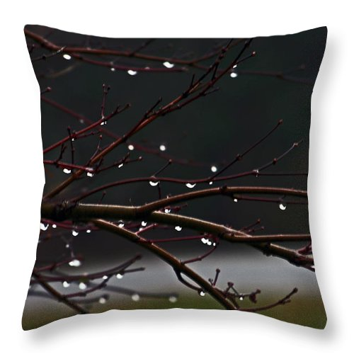 Water Throw Pillow featuring the photograph Water Droplets by David Campbell