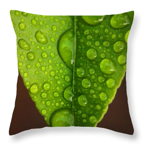 Leaf Throw Pillow featuring the photograph Water Droplets On Lemon Leaf by Ralph A Ledergerber-Photography