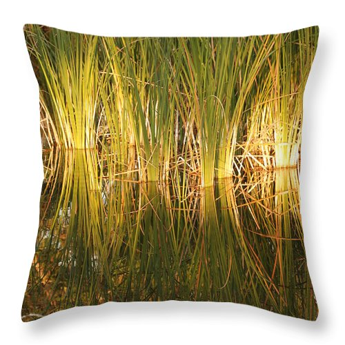 Grass Throw Pillow featuring the photograph Water Grass In Sunset by Rob Hans