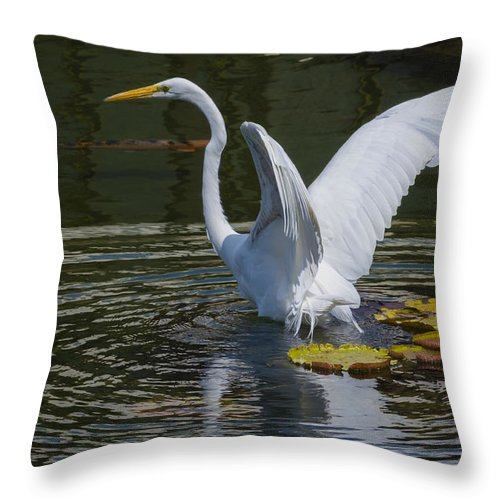 Water Throw Pillow featuring the photograph Water Landing by Dennis Reagan