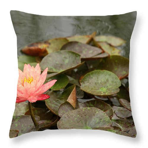 water Lilly Lilly powell Gardens Hdr Throw Pillow featuring the photograph Water Lilly In Summer by Rachel Crozier