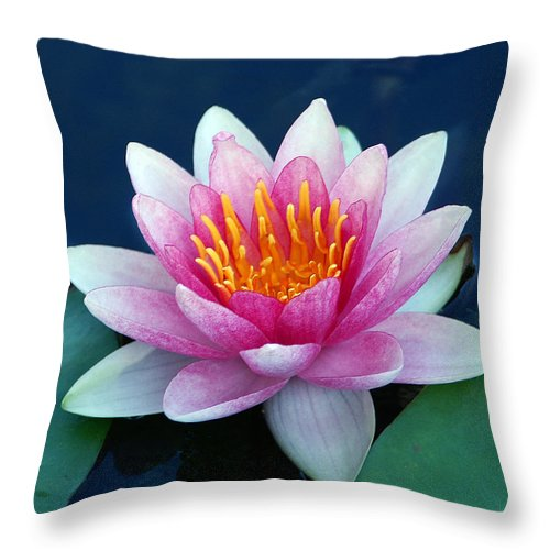 Water Lily Throw Pillow featuring the photograph Water Lily by Bill Morgenstern