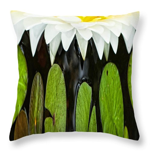 Water Lily Throw Pillow featuring the photograph Water Lily by Cynthia Frohlich