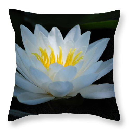 Lily Throw Pillow featuring the photograph Water Lily Glow by Janis Knight