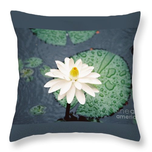 Flowers Throw Pillow featuring the photograph Water Lily by Kathy McClure