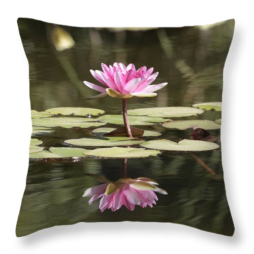 Lily Throw Pillow featuring the photograph Water Lily by Phil Crean