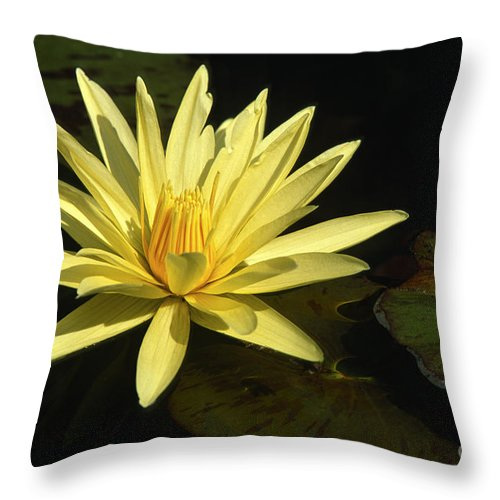Flowers Throw Pillow featuring the photograph Water Lily by Sandra Bronstein