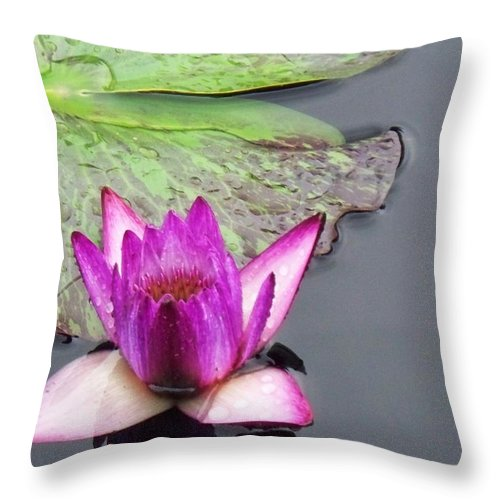 Lily Throw Pillow featuring the painting Water Lily With Rain Drops by Eric Schiabor